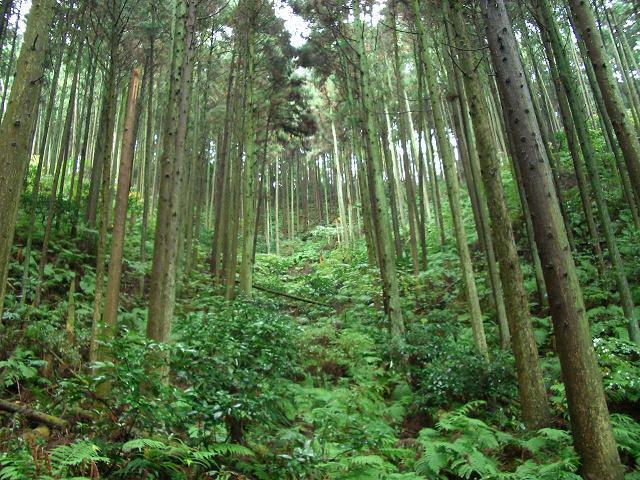 林業のフィールド
